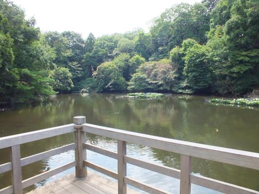 Meiji's pond