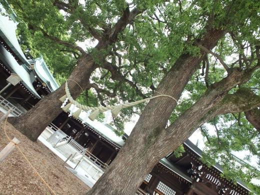Meiji's trees